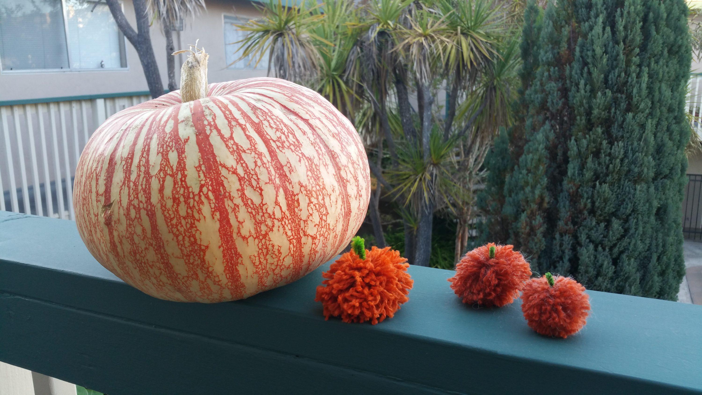 Pom Pom Pumpkins!